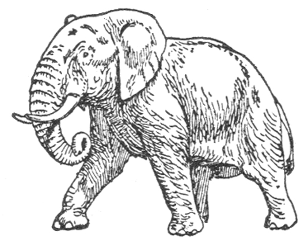 Elephant - African